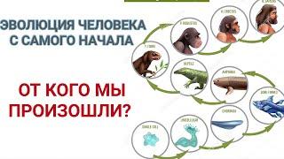Эволюция человека с самого начала. От кого мы произошли?