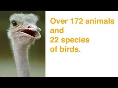 Al Khor Park's mini Zoo