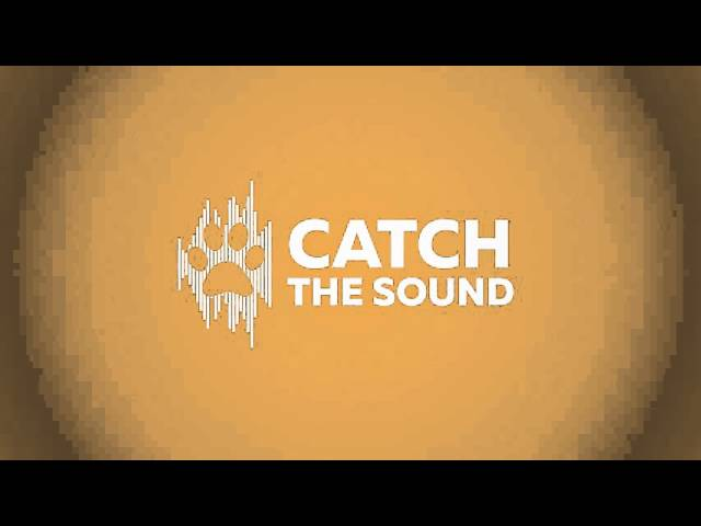 Catch the sound Logo Animation  | My portfolio