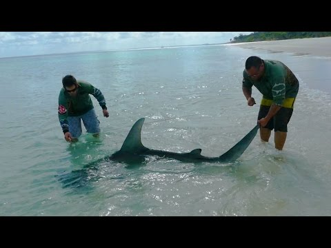 Fraser Island shark fishing... Teaser.. Team madmullet fishing adventures