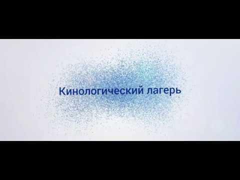 ПЕС НА ВОЛГЕ 2020