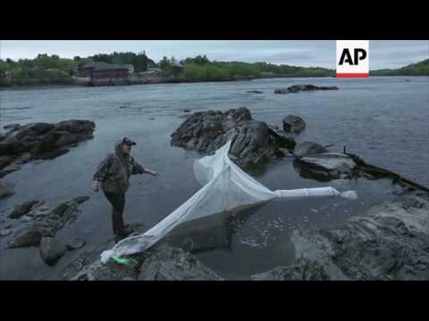 Poaching Threatens Maine's Eel Fishing Industry