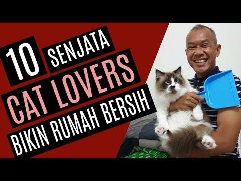 Tips Rumah Bersih Untuk Cat Lovers