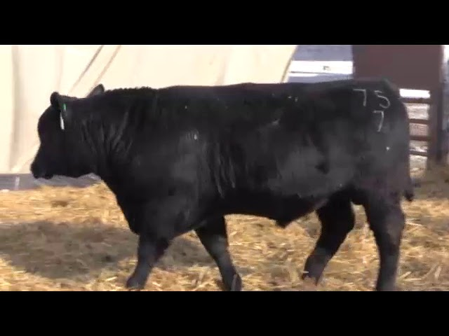 Marcy Cattle Company Lot 82