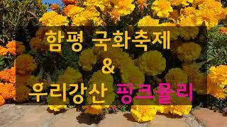 [앙또꼬숑] 함평국화축제/Ham-pyung Expo P…