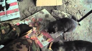 Лёлик и Болик часть 1. Ополченец  кормит оголодавших котят солдатскими галетами. г. Луганск