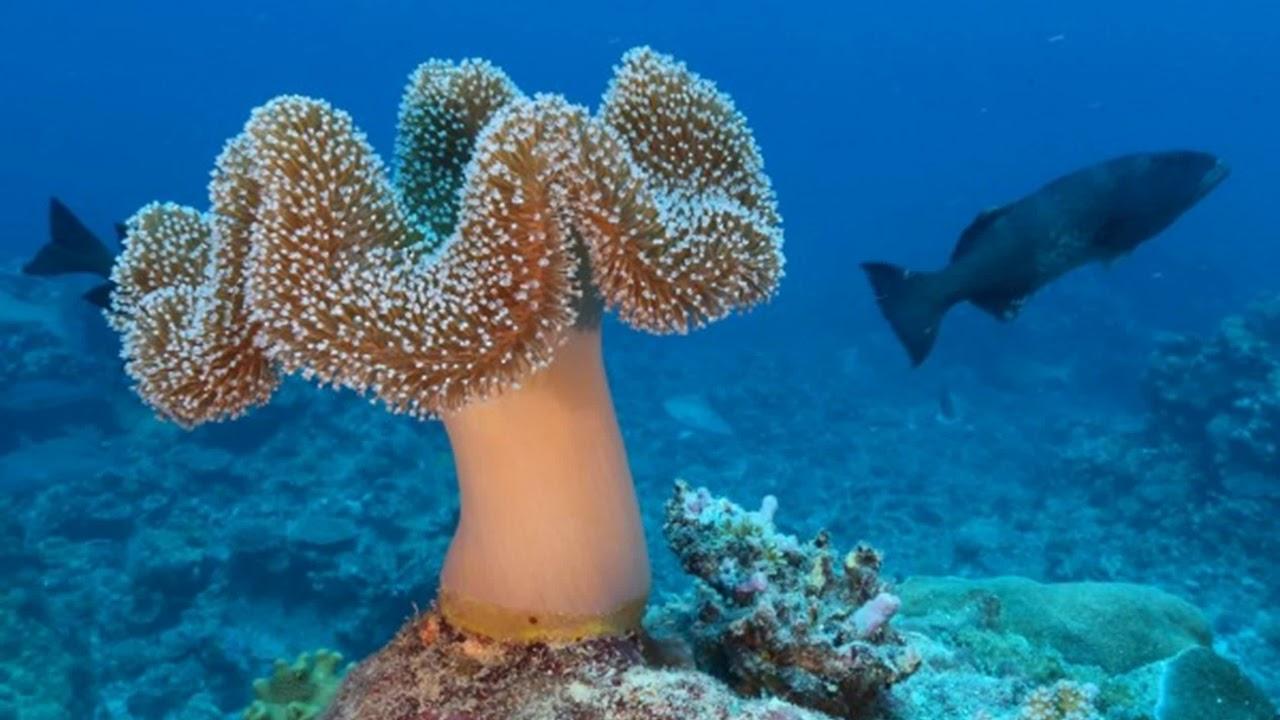 Cele mai spectaculoase fotografii subacvatice in 2012 | La ... |Ocean Life Plant Caribbean