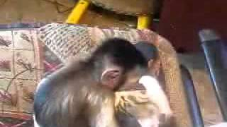 Cat, monkey  and their love story | Обезьяна и киса
