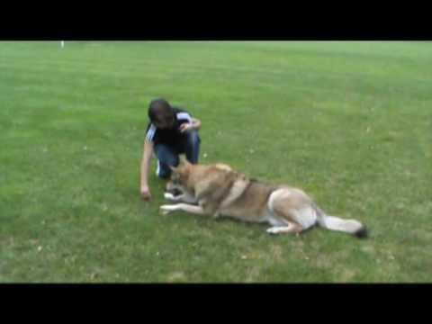comment apprendre à son chien à ramper