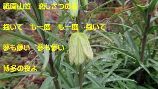 博多の夜(野村美菜)coverなつみ