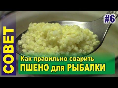как варить пшенку для прикормки