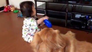 バットは足におもちゃをはめられても全然動じない´д` 今日も仲良く遊ん...