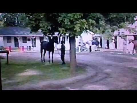 Dehere - The Saratoga Sensation