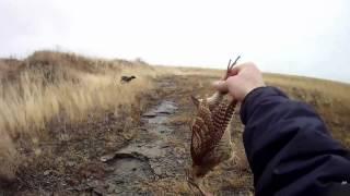 Охота на вальдшнепа с дратхааром