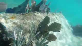 Dry Tortugas National Park Part 2a - Snorkeling