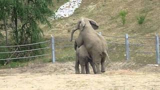 Słonie - Poznań ZOO 2011 /elephants