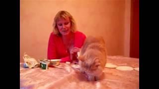 Среди других молочных продуктов кошка выбирает симбионты Кутушова