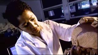 MBT - Forensic Anatomist