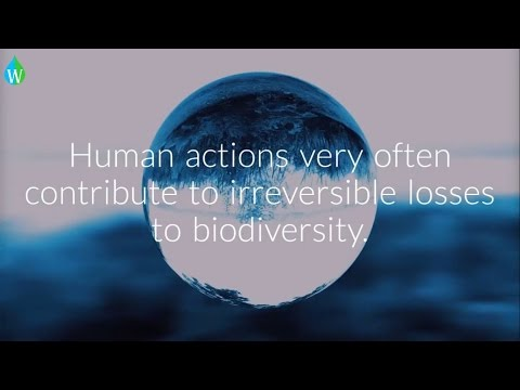 INTERNATIONAL DAY FOR BIOLOGICAL DIVERSITY 2017 (Waterpedia)