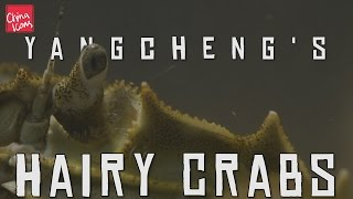 Yangcheng Lake's Hairy Crabs | A China Icons video