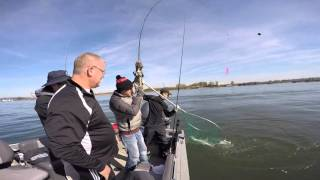 spring chinook salmon fishing on the columbia river in portland oregon march 31 2016