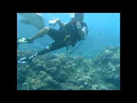 Hawaiian Monk Seal Jun 10 2014