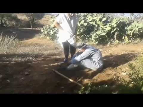 فيلم الريفي القصير -صراع الأب و الأبناء-