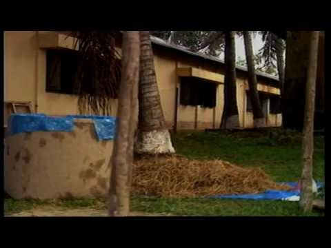 গরু মোটা-তাজা করার পদ্ধতি -Bangladesh Open University-Shaik Siraj-7