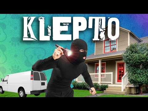 Panda & Wildcat, the Worst Robbers in the World - KLEPTO FUNNY MOMENTS