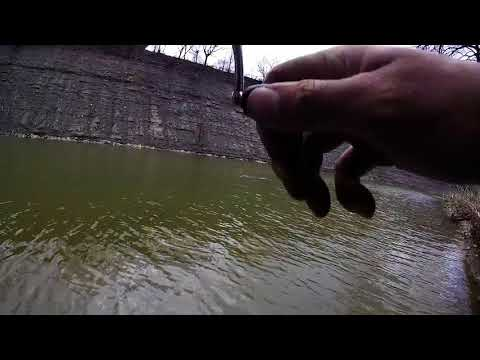 My FIRST Fish Ohio! - 30 Inch 10lb - Rocky River - Steelhead #34 (on Video)