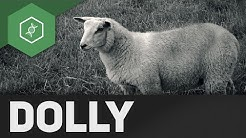 Dolly, ein geklontes Schaf?! ● Gehe auf SIMPLECLUB.DE/GO & werde #EinserSchüler