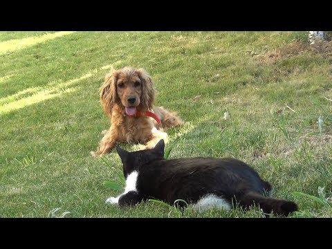 "Guardian cats say ""You Shall Not Pass, Dog!"""