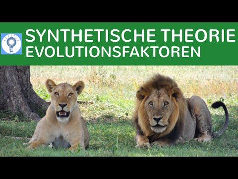 synthetische evolutionstheorie evolutionsfaktoren evolution 9 youtube. Black Bedroom Furniture Sets. Home Design Ideas