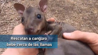 Youtuber rescata a bebé canguro de los incendios en Australia