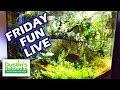 Aquarium Friday Fun LIVE