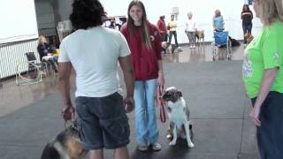 Canine Good Citizen Cgc Therapy Dog Test Part Ll