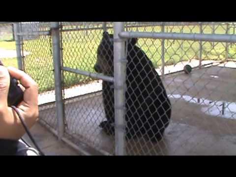 Animals in Petting Zoo, North Carolina
