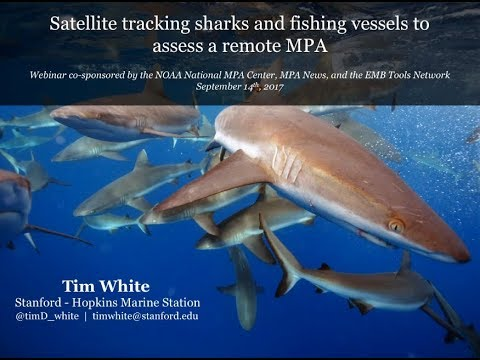 Satellite tracking sharks and fishing vessels to assess a remote MPA