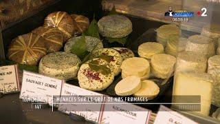 Menaces sur le goût de nos fromages - Tout compte fait