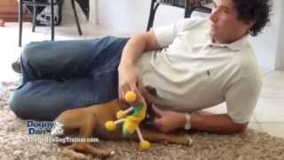 How To Train Your Dog Tips Tricks And Secrets To Master Dog Training