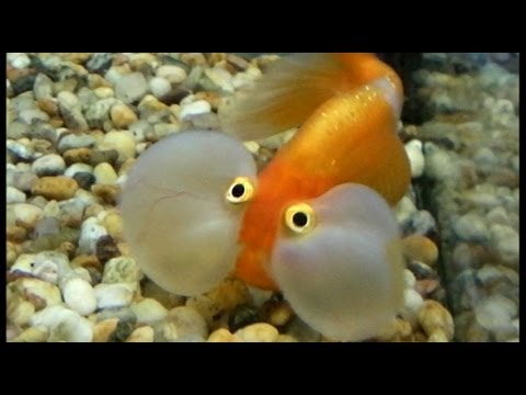 Fish Doing Weird Things 7
