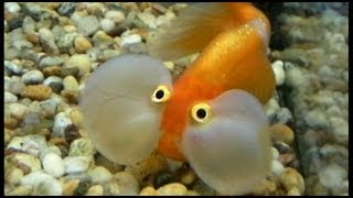 The Funniest Fish Ever - Funny But Ugly and Scary Fish