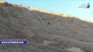 شاهد.. مغامرة الماعز والاغنام في تسلق قمة جبل حمام موسى بطور سيناء