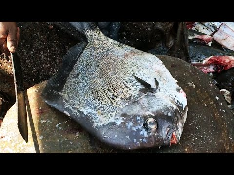 Live Giant Fish Cutting And Scaling In Asia S Largest Market