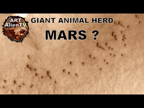 GIANT ANIMAL HERD on MARS ? Dome Buildings ? Dunes ? ArtAlienTV - 1080p60