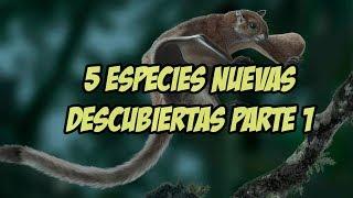 5 nuevas especies descubiertas en la actualidad parte 1 Explorando lo curioso