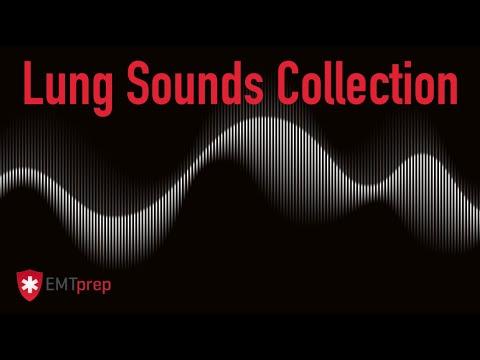 Lung Sounds Collection - EMTprep.com