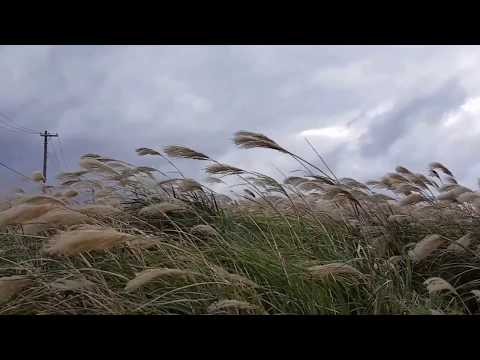 "Lisa Hannigan - Blow The Wind( ""Blow the Wind Southerly"")"