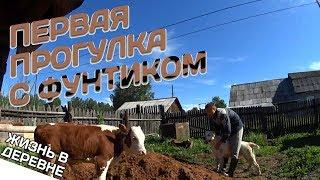 Первая прогулка с Фунтиком // Жизнь в деревне