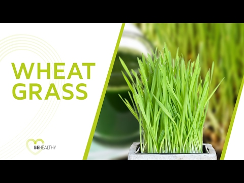 Wheatgrass Health Benefits: Everything You Should Know About this Superfood